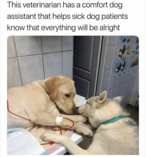 https://t.co/vL2SAp6Zfx: This veterinarian has a comfort dog  assistant that helps sick dog patients  know that everything will be alright https://t.co/vL2SAp6Zfx
