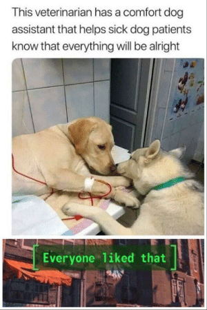 Doctor Doggo by Coit-G MORE MEMES: This veterinarian has a comfort dog  assistant that helps sick dog patients  know that everything will be alright  Everyone 1iked that Doctor Doggo by Coit-G MORE MEMES