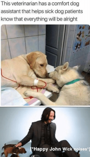 30-minute-memes:John Wick approves: This veterinarian has a comfort dog  assistant that helps sick dog patients  know that everything will be alright  Happy John Wick noises] 30-minute-memes:John Wick approves