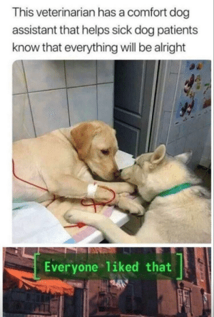 That's beautiful via /r/wholesomememes https://ift.tt/2KBblFf: This veterinarian has a comfort dog  assistant that helps sick dog patients  know that everything will be alright  Everyone liked that That's beautiful via /r/wholesomememes https://ift.tt/2KBblFf