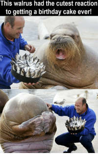 RT @Picswithastory: adorable: This walrus had the cutest the reaction  to getting a birthday cake ever! RT @Picswithastory: adorable