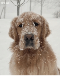 """Dank, Snow, and Time: """"This was his first time in the snow, I don't think he was a fan"""" 😂😂"""