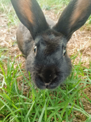 This was my first and best bun bun, Ricardo! He was the best bunny I could have asked for ❤️ I hope you guys love him as much as I did!!: This was my first and best bun bun, Ricardo! He was the best bunny I could have asked for ❤️ I hope you guys love him as much as I did!!