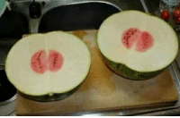 Life, Girl Memes, and Watermelon: this watermelon is the most disappointing thing Ive ever seen in my life https://t.co/jepIPwXhG8