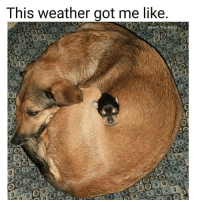 Memes, Tbt, and Uber: This Weather got me like.  @Kevin The Kid Would you like to advertise your business, your talent, a funny video or something else on my page? 🆗🆒🆕DM me for very cheap rates.😎😎😎See great results💯💯💯 ❤❤SHOUT OUT Sunday SALE 🌏🌎PayPal only💰💰💰✔✔✔ Go subscribe to my YouTube @mutebitch2😎😎😎 🚘FREE £10 FOOD 🚘FREE £10 FOOD 🚘FREE 🆕🆕🆕🆕🆕CentralDish CentralDish Centraldish £10 OFF your first takeaway order GO TO: Centraldish.com-signup and add the reward code MICH6703 at the checkout page. FREE RIDE 🚘 FREE RIDE🚘 FREE RIDE Need a taxi? Have you tried Uber? Use my promo code MUTEDOG2 for your first ride on me❤❤❤ Click the link in my bio😎 🚘FREE🚘FREE 🚘FREE 🚘FREE🚘 🆕GETT GETT GETTAXI 🚕🚕🆓🆓 Use my code GTESXCT for £5 off your first taxi ride.🆒 Get the app: http:-invitev-uk.gett.com-code-GTESXCT🚕🚕 🚘FREE🚘FREE 🚘FREE 🚘FREE🚘 mutebitch2 uber GETT cabs food 2017 instagramstories love tbt repost cute me instagood followme summer instadaily happy photooftheday me like4like friends selfie girl fun art tags4likes smile follow mutebitch3