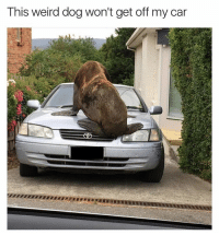 Get off sea pup @_theblessedone: This weird dog won't get off my car Get off sea pup @_theblessedone
