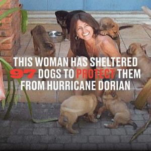 She's sheltering 79 of the dogs in her own bedroom, her house is covered in dog pee and poo, but the animals are safe from Hurricane Dorian. What a woman 👏: THIS WOMAN HAS SHELTERED  DOGS TO PROFEG THEM  FROM HURRICANE DORIAN She's sheltering 79 of the dogs in her own bedroom, her house is covered in dog pee and poo, but the animals are safe from Hurricane Dorian. What a woman 👏