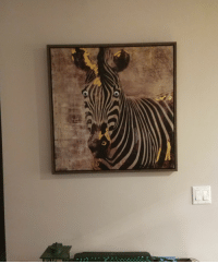 Funny, Today, and Watch: This zebra used to reside in the bathroom and always watch you pee. He was aptly named 'Piss Zebra', today i put googly eyes on him.