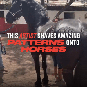 Dank, Horses, and Amazing: THISARTIST SHAVES AMAZING  PATTERNS  ONTO  ORSES These horses have the sharpest trims in the stable for sure 🐴✂️  Rob The Original
