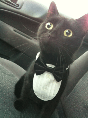 Regret, Tumblr, and Blog: thiscorpsofbrothers:  jasbeaw:  What do you mean, vet's office? YOU SAID WE WERE GOING TO THE PHILHARMONIC!  i've reblogged this at least seven times and i don't regret any of them