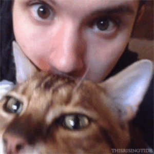 Cute, Tumblr, and Blog: THISRISINGTIDE ryden-beebo:Look at this bean. He is so cute!!! So is the cat…