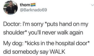 Dank, Doctor, and Memes: thom  @Barknado69  Doctor: I'm sorry *puts hand on my  shoulder* you'll never walk again  My dog: *kicks in the hospital door*  did somebody say WALK Meirl by Rasuco MORE MEMES