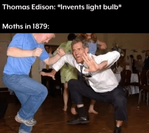 Party time by jiggly_meow MORE MEMES: Thomas Edison: *Invents light bulb*  Moths in 1879: Party time by jiggly_meow MORE MEMES