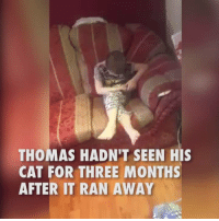 Thomas had lost his pet cat Dave, he was overwhelmed to see Dave return to the house after being separated for three months.: THOMAS HADN'T SEEN HIS  CAT FOR THREE MONTHS  AFTER IT RAN AWAY Thomas had lost his pet cat Dave, he was overwhelmed to see Dave return to the house after being separated for three months.