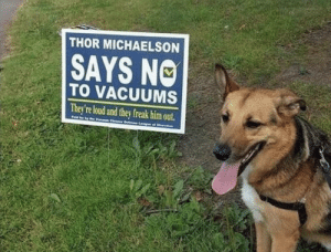 Thor, Him, and Can: THOR MICHAELSON  SAYS NO  TO VACUUMS  They're loud and they freak him out.  Pai  Vaa CheaD e o Finally, a political platform we all can get behind. I'm Thor & I approve this message