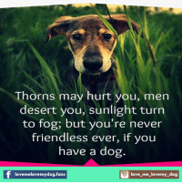 Dogs, Love, and Memes: Thorns may hurt you, men  desert you, sunlight turn  to fog, but you're never  friendless ever, if you  have a dog.  S love-me-lovemy dog  love melovemydog.fans
