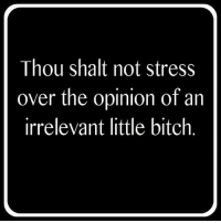Bitch, Memes, and 🤖: Thou shalt not stress  over the opinion of an  irrelevant little bitch