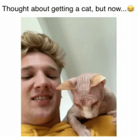 Memes, Thought, and 🤖: Thought about getting a cat, but now. Not so sure anymore 😂 Credit: @jdytrych22