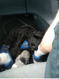 Journey, Sleeping, and Thought: Thought he was sleeping on the car journey and looked down to this