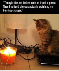 "Cats, Cute, and Funny: ""Thought the cat looked cute so l took a photo.  Then l noticed she was actually watching my  burning charger."" Some cats just want to watch the world burn... Who am I kidding, all of them do lol"