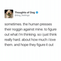 Love, Memes, and Heart: Thoughts of Dog <  @dog_feelings  sometimes. the human presses  their noggin against mine. to figure  out what i'm thinking. so i just think  really hard. about how much i love  them. and hope they figure it out MY HEART! Doggos know. Tw dog_feelings