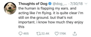Quite, Acting, and How: Thoughts of Dog @dog._... 7/30/18  the human is flapping my ears. and  acting like i'm flying. it is quite clear i'm  still on the ground. but that's not  important. i know how much they enjoy  this  465 t22.4K 176K Why do you humans. do this.?
