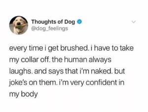 Confidence, Memes, and Jokes: Thoughts of Dog  @dog feelings  every time i get brushed. i have to take  my collar off. the human always  laughs. and says that i'm naked. but  joke's on them. i'm very confident in  my body Its all about confidence Karen damn! via /r/memes https://ift.tt/2qzkXWj