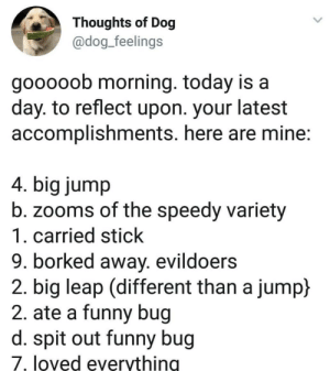 I wanna be a dog someday: Thoughts of Dog  @dog_feelings  gooooob morning. today is a  day. to reflect upon. your latest  accomplishments. here are mine:  4. big jump  b. zooms of the speedy variety  1. carried stick  9. borked away. evildoers  2. big leap (different than a jump)  2. ate a funny bug  d. spit out funny bug  7. loved everything I wanna be a dog someday