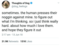 """Love, Good, and Figure It Out: Thoughts of Dog *  @dog_feelings  sometimes. the human presses their  noggin against mine. to figure out  what i'm thinking. so i just think really  hard. about how much i love them  and hope they figure it out  2:17 am 13 Jun 18  31.9K Retweets 151K Likes <p>Good doggo via /r/wholesomememes <a href=""""https://ift.tt/2l4s71Q"""">https://ift.tt/2l4s71Q</a></p>"""