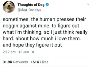 Love, Good, and Figure It Out: Thoughts of Dog *  @dog_feelings  sometimes. the human presses their  noggin against mine. to figure out  what i'm thinking. so i just think really  hard. about how much i love them  and hope they figure it out  2:17 am 13 Jun 18  31.9K Retweets 151K Likes Good doggo