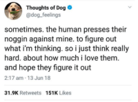 Cute, Dogs, and Love: Thoughts of Dog  @dog_feelings  sometimes. the human presses their  noggin against mine. to figure out  what i'm thinking. so i just think really  hard. about how much i love them.  and hope they figure it out  2:17 am 13 Jun 18  31.9K Retweets 151K Likes dogs r so cute ❤️