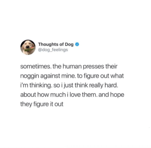 Love, Figure It Out, and Hope: Thoughts of Dog  @dog_feelings  sometimes. the human presses their  noggin against mine. to figure out what  i'm thinking. so i just think really hard.  about how much i love them. and hope  they figure it out