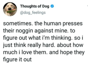 awesomacious:  Dog thoughts: Thoughts of Dog  @dog_feelings  sometimes. the human presses  their noggin against mine. to  figure out what i'm thinking. so i  just think really hard. about how  much i love them. and hope they  figure it out awesomacious:  Dog thoughts