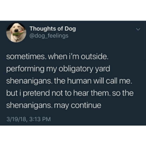 Lol, Shenanigans, and Dog: Thoughts of Dog  @dog_feelings  sometimes. when i'm outside.  performing my obligatory yard  shenanigans. the human will call me.  but i pretend not to hear them.so the  shenanigans. may continue  3/19/18, 3:13 PM LOL