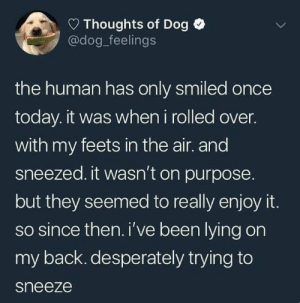 Animals, Funny, and Memes: Thoughts of Dog  @dog feelings  the human has only smiled once  today. it was when i rolled over.  with my feets in the air. and  sneezed. it wasn't on purpose.  but they seemed to really enjoy it.  so since then.i've been lying on  my back. desperately trying to  sneeze 42 Funny Dog Memes That'll Make Your Day! - Lovely Animals World