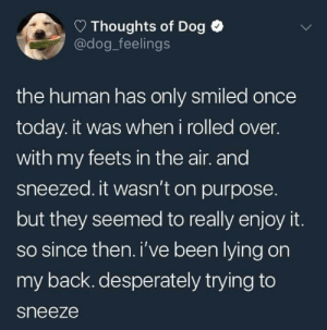 Good, Today, and Lying: Thoughts of Dog  @dog_feelings  the human has only smiled once  today. it was when i rolled over.  with my feets in the air. and  sneezed. it wasn't on purpose  but they seemed to really enjoy it.  so since then. i've been lying on  my back. desperately trying to  sneeze Dog is good. :-)