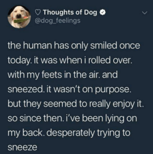 awesomacious:  The Human loves the sneezy boi: Thoughts of Dog  @dog_feelings  the human has only smiled once  today. it was when i rolled over.  with my feets in the air. and  sneezed. it wasn't on purpose.  but they seemed to really enjoy it  so since then. i've been lying on  my back. desperately trying to  sneeze awesomacious:  The Human loves the sneezy boi