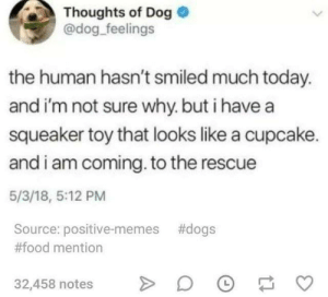 Dank, Dogs, and Food: Thoughts of Dog  @dog feelings  the human hasn't smiled much today.  and i'm not sure why. but i havea  squeaker toy that looks like a cupcake.  and i am coming. to the rescue  5/3/18, 5:12 PM  Source: positive-memes #dogs  #food mention  32,458 notes DF