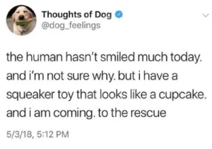All Dogs Go To Heaven: Thoughts of Dog  @dog_feelings  the human hasn't smiled much today.  and i'm not sure why. but i have a  squeaker toy that looks like a cupcake.  and i am coming. to the rescue  5/3/18, 5:12 PM All Dogs Go To Heaven