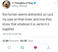 Dog, Human, and They: Thoughts of Dog  @dog_feelings  the human seems distracted. so i put  my paw on their knee. and now they  know. that whatever it is. we're in it  together  12/11/18, 6:28 PM  12.8K Retweets 84.3K Likes For anyone going through final exams or anything else this week :)