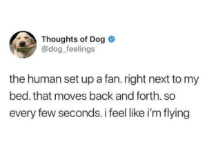 Finding joy in the simplest of things: Thoughts of Dog  @dog_feelings  the human set up a fan. right next to my  bed. that moves back and forth. so  every few seconds. i feel like i'm flying Finding joy in the simplest of things
