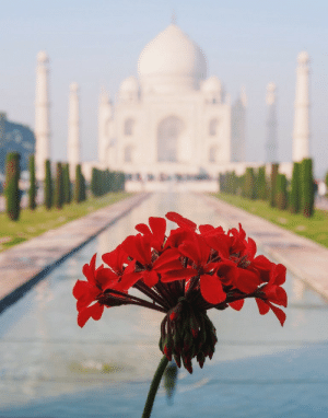 thoughtsforbeees:  Taj Mahal in the springtime // India: thoughtsforbeees:  Taj Mahal in the springtime // India