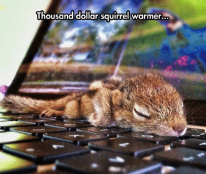 epicjohndoe:  And It's Worth Every Cent: Thousand dollar squirrel warmer  .. epicjohndoe:  And It's Worth Every Cent