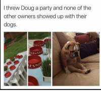 Douge: threw Doug a party and none of the  other owners showed up with their  dogs.