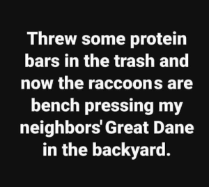 Protein, Trash, and Neighbors: Threw some protein  bars in the trash and  now the raccoons are  bench pressing my  neighbors' Great Dane  in the backyard. Protein power 🤦🏼‍♀️💪🏼