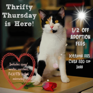 Cats, Memes, and Kittens: Thrifty  Thursday  is Here!  1/2 OFF  ADOPTION  FEES  Kittens $35  Cats $20 op  less  DDM  Includes spay/  neuter, vaccines  FeLV/FIV tested  microchip As we start filling up with cats and kittens again it's time to start thinking Thrifty Thursday!  Don't forget all cats and kittens are 1/2 off adoption fees all day on Thursdays!  #hsomc #thriftythursday #foreverbeginshere #adopt