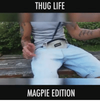 Dank, Fucking, and Life: THUG LIFE  MAGPIE EDITION ah fuck guys even the magpies are stealing our shit these days better keep an eye on the cunts or you might lose your durries as well fair warning boys