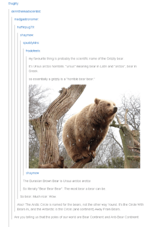 """Bear bear bearomg-humor.tumblr.com: thugilly  derinthemadscientist  madgastronomer  hufflepug79:  shaymew  spuddykins  frodofeels  my favourite thing is probably the scientific name of the Grizzly bear  It's Ursus arctos horribilis. """"ursus"""" meaning bear in Latin and""""arctos"""", bear in  Greek.  so essentially a grizzly is a """"horrible bear bear.""""  shaymew  The Eurasian Brown Bear is Ursus arctos arctos  So literally """"Bear Bear Bear"""". The most bear a bear can be.  So bear. Much roar. Wow.  Alsol The Arctic Circle is named for the bears, not the other way 'round. It's the Circle With  Bears In, and the Antarctic is the Circle (and continent) Away From Bears.  Are you telling us that the poles of our world are Bear Continent and Anti-Bear Continent Bear bear bearomg-humor.tumblr.com"""