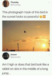 skis: Thumby  @thuumby  This photograph I took of this bird in  the sunset looks so peaceful  Anson  @ansontm  Am I high or does that bird look like a  rabbit on skis in the middle of a long  jump..