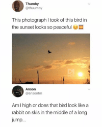 🔥 @no.body_special 🔥 is the funniest page you don't follow 🦄: Thumby  @thuumby  This photograph I took of this bird in  the sunset looks so peaceful e  Anson  @ansontm  Am I high or does that bird look like a  rabbit on skis in the middle of a long  Jump 🔥 @no.body_special 🔥 is the funniest page you don't follow 🦄